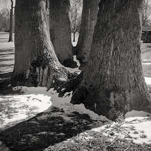 trees-t3043