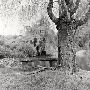 camera_scan-tree2