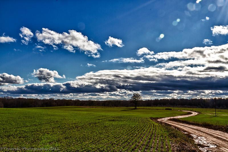 Cottage Road w/winter grass