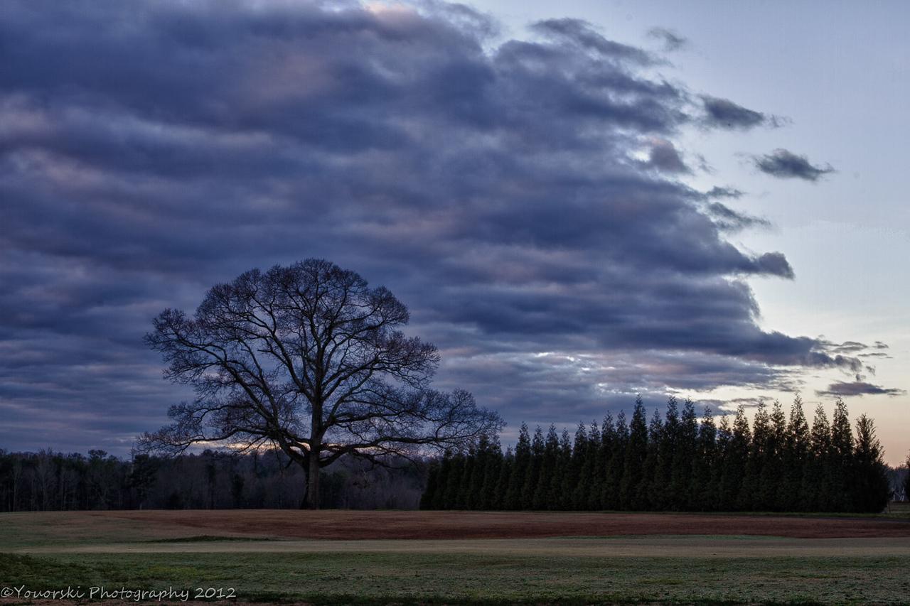Driving Range Oak and Evergreen trees. Morgan Dairy Golf Club