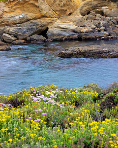 Small cove at Pt Lobos
