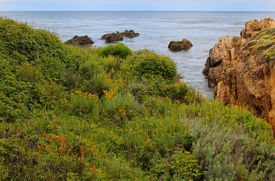 Point Lobos Scene