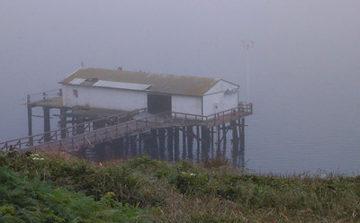 Foggy Morning at Pt. Reyes