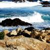 Monterey Bay in California 3