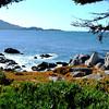 Monterey Bay in California 8