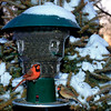 Bird Feeders :