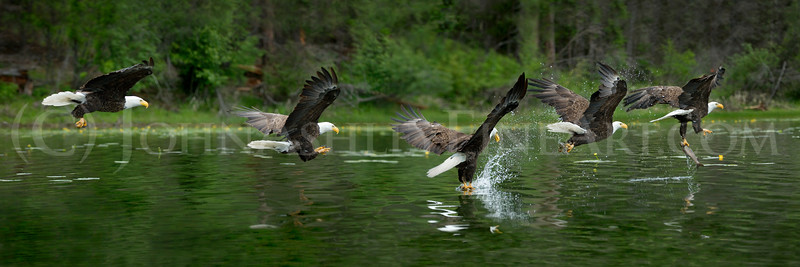 """Eagle Talons."""