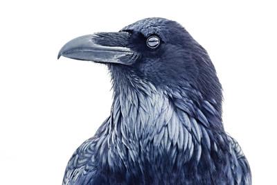 """Blue Raven."""