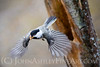 """Chickadee Construction."""