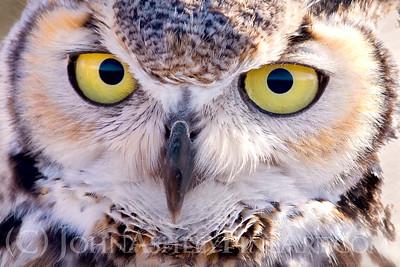 """""""Owl Eyes."""""""