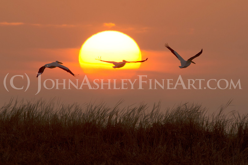 """Pelican Sunset"""
