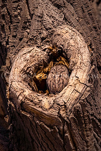 I (Heart) Owls