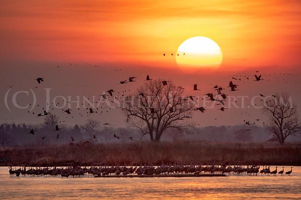 """Platte River Sandhill Cranes"""