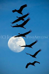 """Moonlight Flight."""