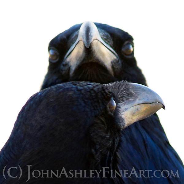 """Raven Soul Mates."""