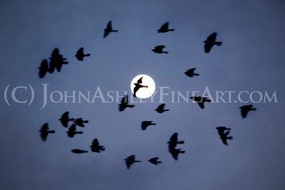 """Blackbird Moon."""