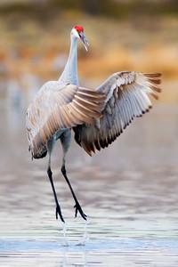 """Crane Dance"""