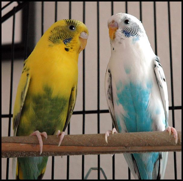 Daisy and Merry,  11-2009