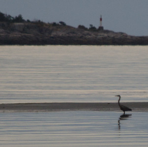 Blue Heron and Maude Island lighthouse