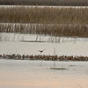 Birds at 309 River Ridge Road 04-14-11