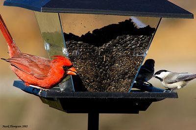 Cardinal & Chickadee