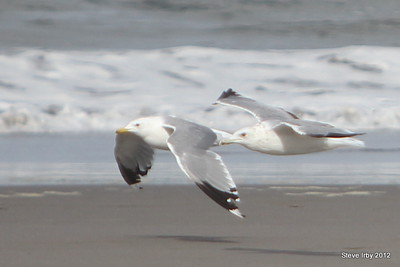 Birds on LongBeach 0829-2012