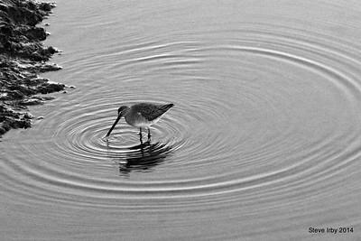 Birds on the Willipa