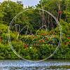 Caroni bird sanctuary-MG_5425