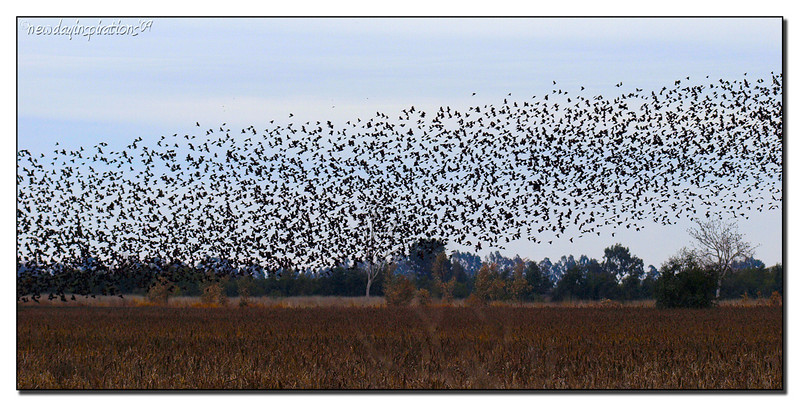Tons of Birds taking off