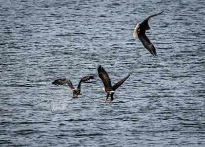 3 Bauld Eagles Fishing