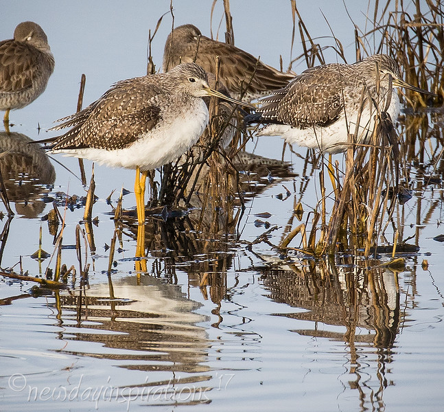 Palo Alto Baylands, shore birds, black necked stilt, american avocet, least sandpiper
