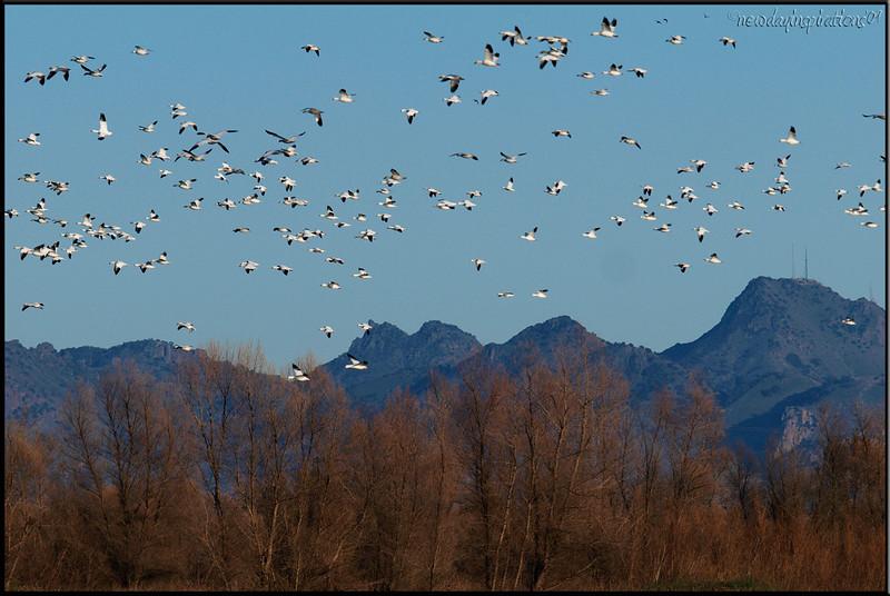Colusa National Wildlife Refuge