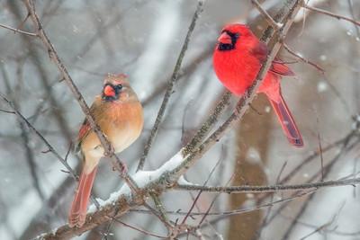 Cardinals 2139