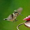 Tiny Talons by TruImages