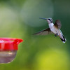 Hummingbird, North Carolina