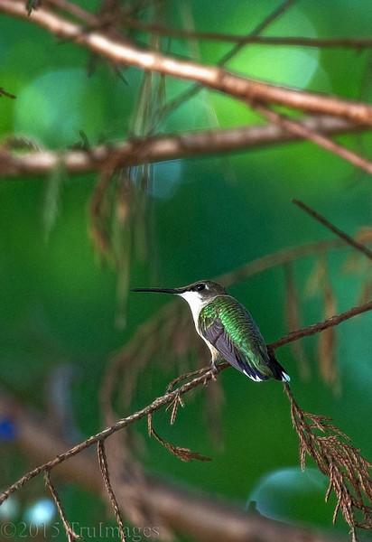Guarding the Nectar