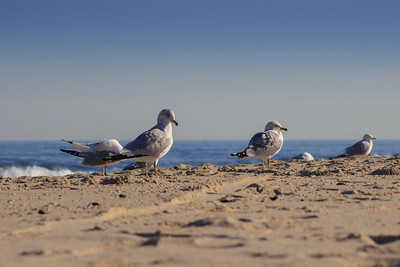 Seagulls on a Winter Beach