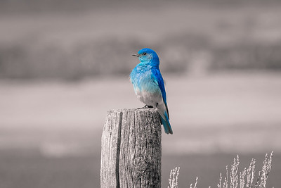 Standing Out Blue