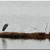Feb 5<br /> The lone fisherman