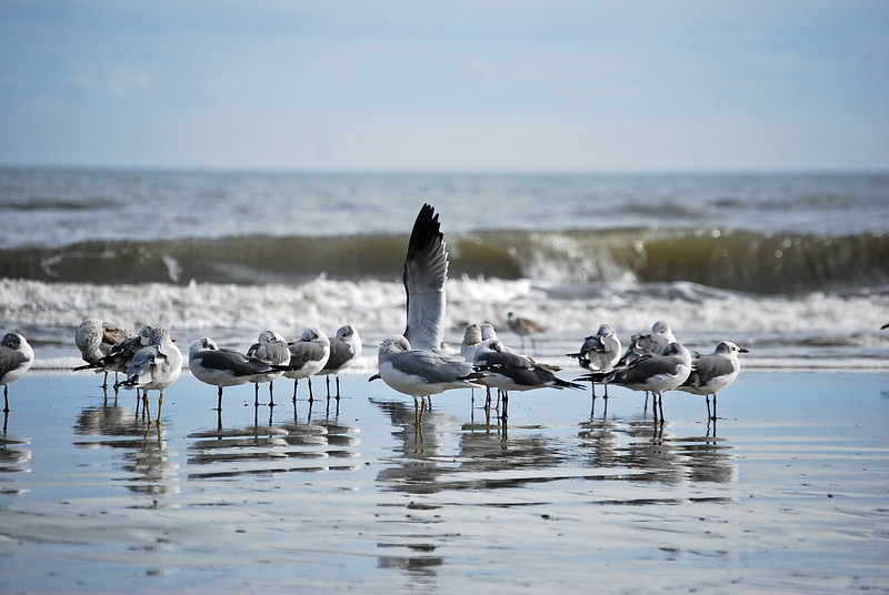 A bird seems to wave as an ocean wave crashes