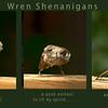 Wren Shenanigans