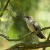 Hummingbird Break