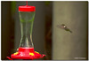 Jul 23<br /> Tiny power!<br /> <br /> This was a handheld shot from 200mm away. There were many hummingbirds buzzing around the feeders.