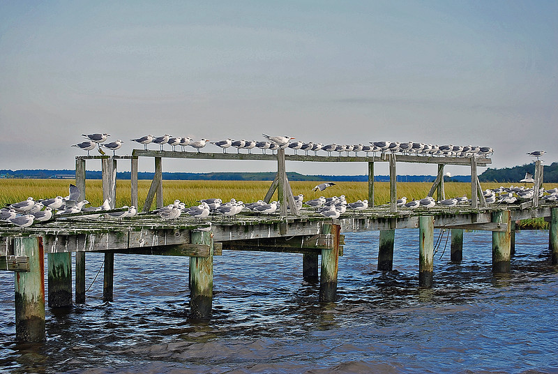 Birds of a feather flock on a dock together