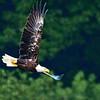 Bald eagle patrol