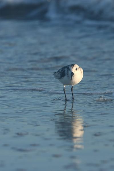 IMG_8103 Little Bird 2