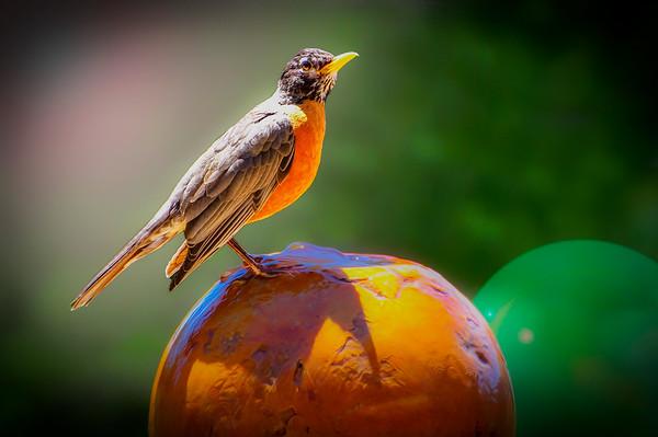 Robin on the Fountain