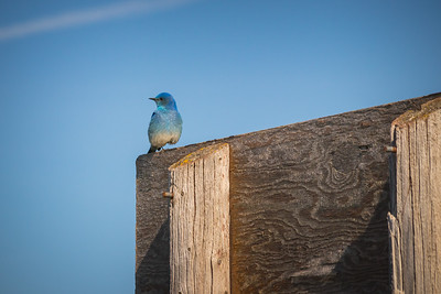 A Bluebird Sky