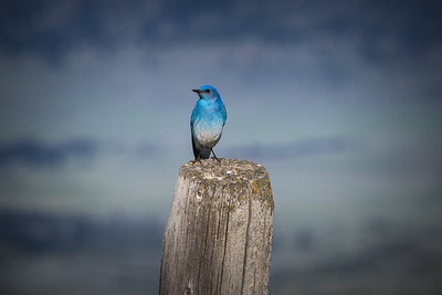 Fencepost Blue