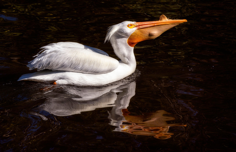 beak full